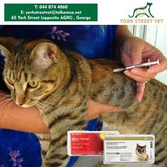 Great news for all cat owners. Get your feline child vaccinated at York street Vets Shop from now until the end of the year for only R199.00. This includes 3in1, leukemia and rabies injections plus we will give them a quick check over. Make your booking today. #petcare #vetstore #health