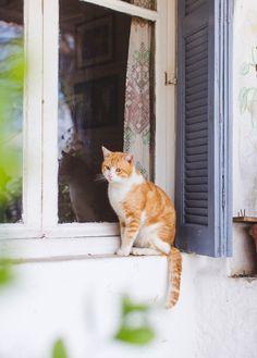 Cats in Plaka, Athens . WishWishWish