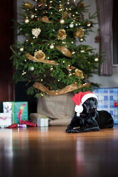 Black Lab Merry Christmas Card Puppy Holiday Dogs Santa Claus Dog Puppies Xmas Labrador Retriever Labs