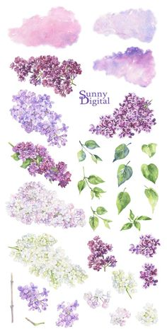 Mothers Day Crafts For Kids Discover Lilac clipart Floral watercolor Handpainted spring flowers White lilac PNG Digital pink lilac Printable separate elements Wedding DIY Lilac Flowers, Spring Flowers, Exotic Flowers, Watercolor Flowers, Watercolor Paintings, Watercolor Wedding, Watercolor Portraits, Watercolor Landscape, Abstract Paintings