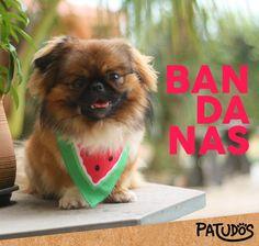 Seu dog cheio de estilo com a bandana melancia! #patudos #mundopatudos #pet #bandana #melancia #cachorro #dog #petshop