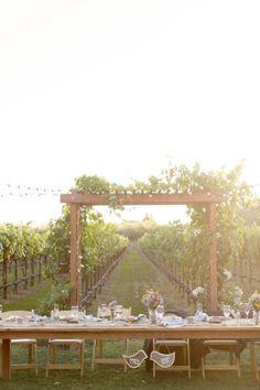 Vineyard backdrop
