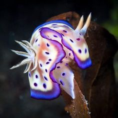 Underwater Art, Underwater Photography, Colorful Animals, Cute Animals, Fishing Pictures, Sea Slug, Types Of Animals, Animal Projects, Ocean Creatures