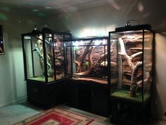 Feeding Your Bearded Dragon In The Right Way Reptile House, Reptile Habitat, Reptile Room, Reptile Cage, Terrarium Tank, Snake Terrarium, Terrarium Ideas, Bearded Dragon Cage, Bearded Dragon Habitat