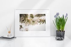 Framed poster of spring blooming tree - Flowers on a tree in Canada - Toronto photographer - Framed Photo Print - Home Decor - Wall Art Spring Blooming Trees, Home Decor Wall Art, Framed Art Prints, Toronto, Gallery Wall, Canada, Nature, Flowers, Room