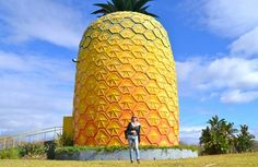 The Big Pineapple, Bathurst. You'll find an auditorium with a 12 minute film on pineapple production, an exhibition on local agriculture, and an observation deck. 19 Weird & Wacky Attractions in South Africa