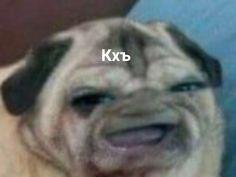 Cartoon Memes, Cat Memes, Dankest Memes, Jokes, Stupid Pictures, Hello Memes, Russian Memes, Cute Love Memes, Funny Video Memes