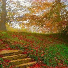 A poco que mires... la selva de Irati es así... #испания #espana #espanha #spain #navarra #irati (Foto @zahori_vii en #Instagram) --> http://www.turismo.navarra.es/esp/organice-viaje/recurso/Patrimonio/3041/La-Selva-de-Irati.htm