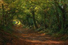 Cesta k halnakerskému větrnému mlýnu v Sussexu v Británii