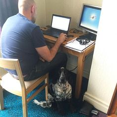 Charlie Dog: work mascot! #working #workfromhome #cockerspaniel