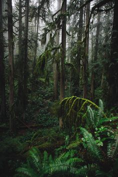 Find images and videos about nature, green and forest on We Heart It - the app to get lost in what you love. Plant Aesthetic, Good Vibe, Tropical Forest, Dark Forest, Wild Nature, Landscape Photos, Beautiful Landscapes, Woodland, Nature Photography