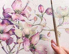Dogwood in watercolor. Flowers sketchbook by Katerina Pytina on Behance. Floral