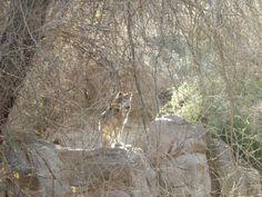 robert bateman wolves - Google Search