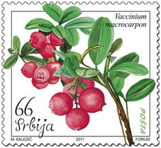 ◇Serbia  2011  Postage Stamp