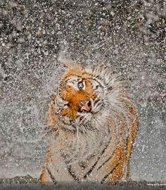 Les 14 photographies gagnantes du National Geographic Photo Contest 2012 | Ufunk.net