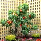 I'd love to have dwarf fruit trees or hybrid trees around my house