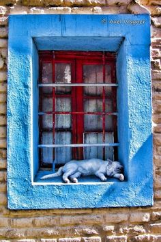 """You'll always be lucky if you know how to make friends with strange cats."" --Colonial American Proverb (Love this! Cat Window, Window View, Crazy Cat Lady, Crazy Cats, I Love Cats, Cute Cats, Chat Kawaii, Animals And Pets, Cute Animals"