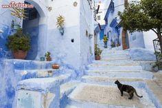 Un gatto solitario nel borgo blu di Chefchaouen. ...