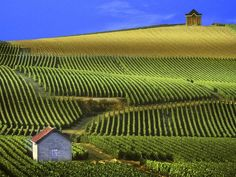 I would love to tour the vineyards of France :) Bonjour!