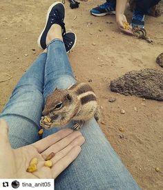 #photography  by @tina_anit05  Hello my friend ----------------------------------------------------------- #ig_fuerteventura #ig_spain #ig_canaryislands #canaryislands #ig_canarias #Ig_islascanarias #animalgood #quesuerteviviraqui #vulcanicrock #animals #animalslover #picoftheday #photooftheday #photography #instagood #instaview #naturlovers #instanatur #naturphoto #ig_photo #fuerteventuraexperience reviews #lovefuerteventura Ten, Spain, Instagram Posts, Photography, Animals, Fotografie, Animais, Animales, Animaux