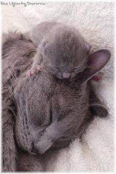 Mummy's head is a very favorite sleeping place!