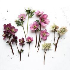"3,289 Likes, 68 Comments - Julia Smith (@humphreyandgrace) on Instagram: ""Hellebores from the garden because I couldn't decide which colour to use in last weeks photo &…"""