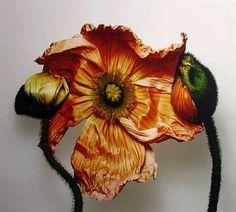Irving Penn - flowers