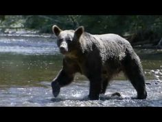 [AMAZING NATURE] Nature's Crazy World - Fearless - 300 Trailer Music - YouTube