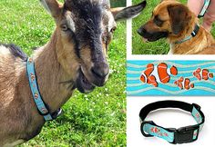 Found this tutorial for making my own dog collars and leashes, can't wait to try it out! *