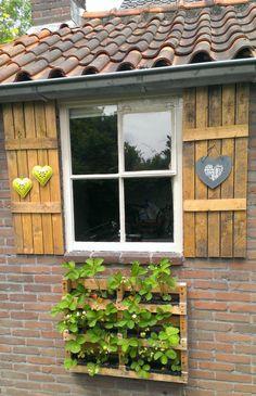 Van oude pallet  een plantenbak met aardbeien van gemaakt