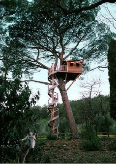 "Your thoughts on this Tree House? La Cabane Perchee (""cabins perched"") is a French company that designs, builds and installs gorgeous rustic treehouses like this for clients around the world. Tree House Masters, Winding Staircase, Spiral Staircase, Patio Grande, Cool Tree Houses, Outdoor Living, Outdoor Decor, Tree Tops, In The Tree"