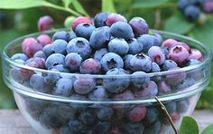 Blueberries help lower cholesterol Blueberries contain antioxidant Pterostilbene that effectively hels lower Cholesterol levels. Blueberries are also rich in soluble fibre and other powerful heart healthy vitamins. Bountiful Baskets, Fertility Diet, Paleo, Vegan Vegetarian, Cholesterol Lowering Foods, Cholesterol Levels, Fruit Seeds, Tree Seeds, Dessert