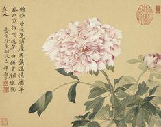 Peony, 清 惲壽平 Yun Shouping (1633-1690), Qing dynasty