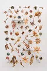 Anicka Yi, 7,070,430K of Digital Spit Exhibition at Kunsthalle Basel in Basel<br>Basel