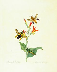 Natural history of the insects of China, - Biodiversity Heritage Library