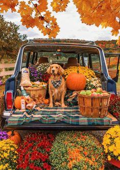 Fall Pictures, Fall Photos, Fall Season Pictures, Autumn Cozy, Autumn Aesthetic, Fall Wallpaper, Hello Autumn, Autumn Inspiration, Happy Fall