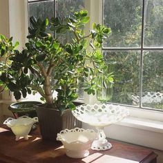 Maybe its hearty nature gave jade its reputation as a source of good luck and prosperity (cha-ching). Place your jade in full sun to keep it from getting too leggy, and water only when the top of the soil is dry. Keep away from pets.