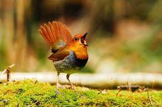 【愛鳥週間】県鳥の画像を貼ってく - ゴールデンタイムズ