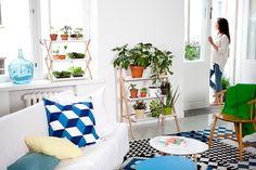 Miss Moss : Kekkilä indoor plant products