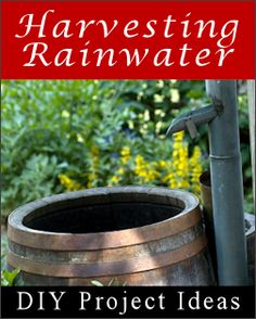 Rainwater Harvesting With Barrels & Chains