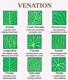How to Identify Leaf Shape, Margin, and Venation: Leaf Venation