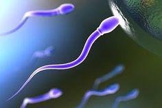 сколько живут сперматозоиды на воздухе