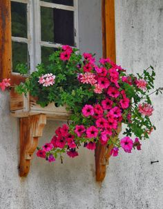 petunias in Styria, Austria Window Box Flowers, Window Boxes, Window Sill, Flower Boxes, Window Planters, Garden Windows, Hanging Baskets, Windows And Doors, Beautiful Gardens