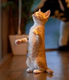 Can I smell tuna? - What more to say other than we just LOVE cool stuff!
