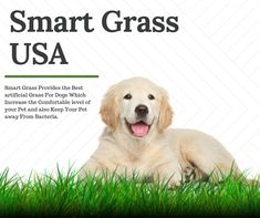 Artificial Grass for Pets, Fake & Synthetic Grass for Dogs, Artificial Turf for Dogs - Smart Grass USA Fake Grass For Dogs, Artificial Grass For Dogs, Artificial Turf, Newport Beach, Lawn, Labrador Retriever, Usa, Pets, Animals