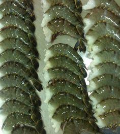 Black Tiger Shrimps: Head-Less-Shell-On, Shrimp Head-Less-Shell-On, Shrimp Peeled & Deveined Packaging: 10 x 1 kg : Size: 13-15, 16-20, 21-25, 26-30, 31-40, 40up