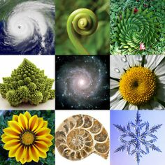 #Geometry in nature