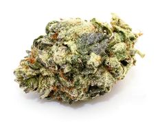 Professional-quality cannabis buds look, taste and smell great