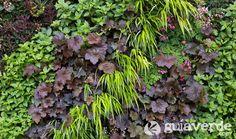 Detalle de jardín vertical