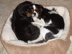Kally and Kirby